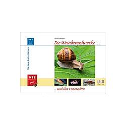 Die Weinbergschnecke und ihre Verwandten. Ulrich Kattmann  - Buch