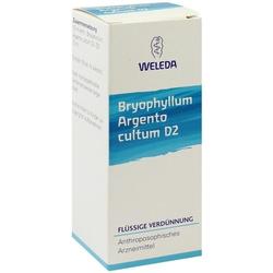 BRYOPHYLLUM ARG CUL D 2
