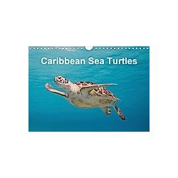 Caribbean Sea Turtles (Wall Calendar 2021 DIN A4 Landscape)