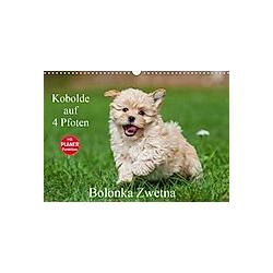 Kobolde auf 4 Pfoten - Bolonka Zwetna (Wandkalender 2021 DIN A3 quer) - Kalender