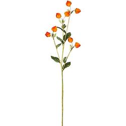 Physaliszweig mit 8 Physalis, 85 cm