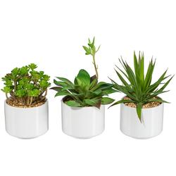 Künstliche Zimmerpflanze Rahel Sukkulente, my home, Höhe 18 cm, im Keramiktopf, 3er Set