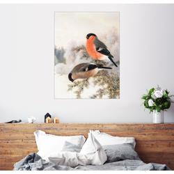 Posterlounge Wandbild, Gimpel 60 cm x 80 cm