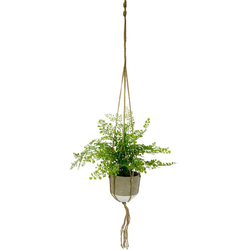 Kunstpflanze Frauenhaar Frauenhaar, I.GE.A., Höhe 40 cm, in Hängeampel