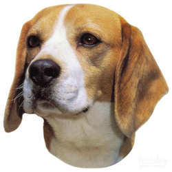 Nobby Aufkleber Beagle