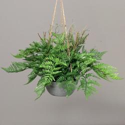 Pflanze Farn(H 34 cm)