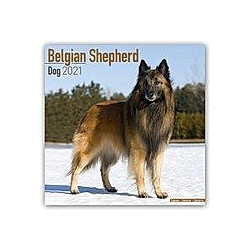 Belgian Shepherd Dog - Belgischer Schäferhund 2021