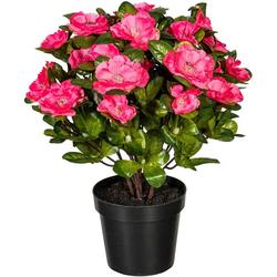 Künstliche Zimmerpflanze Wolga Azalee, DELAVITA, Höhe 32 cm rosa