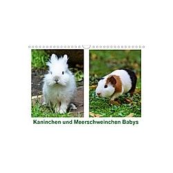 Kaninchen und Meerschweinchen Babys (Wandkalender 2021 DIN A4 quer)