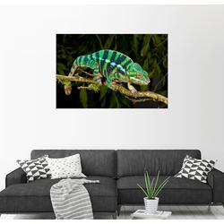 Posterlounge Wandbild, Regenbogen Panther-Chamäleon 130 cm x 90 cm