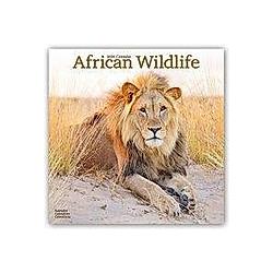African Wildlife 2020