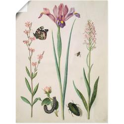 Artland Wandbild Admiral, Rose Iris Knabenkraut., Pflanzen (1 Stück) 45 cm x 60 cm