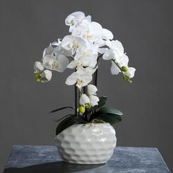 Orchidee in Vase(H 59 cm)