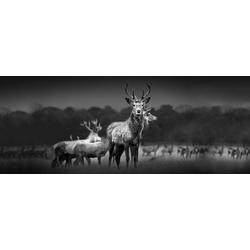Glasbild HERD OF DEER (BHT 125x50x1 cm) Pro-Art