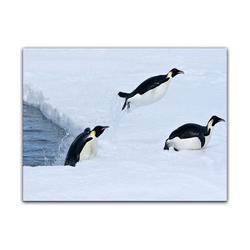 Bilderdepot24 Leinwandbild, Leinwandbild - Pinguin II 60 cm x 50 cm
