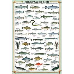 empireposter Poster Maxi-Poster Süsswasserfische