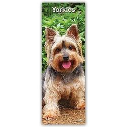 Yorkshire Terrier - Yorkies 2021