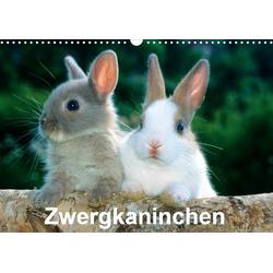 Zwergkaninchen (Wandkalender 2021 DIN A3 quer)