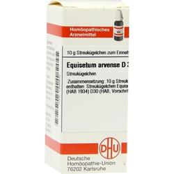 EQUISETUM ARVENSE D30