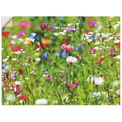 Artland Wandbild Blumenwiese I, Blumenwiese (1 Stück) 80 cm x 60 cm