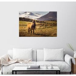 Posterlounge Wandbild, Islandpferd, Island, Pferd 130 cm x 90 cm