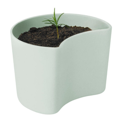 RIG-TIG Anzuchttopf YOUR TREE mit Samen Green grün
