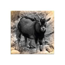 Artland Glasbild Zwergziegen Baby Kontakt, Haustiere (1 Stück) 20 cm x 20 cm x 1,1 cm