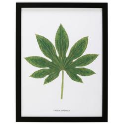 G&C Bild Blatt Fatsia Japonica, 30/40 cm, gerahmt