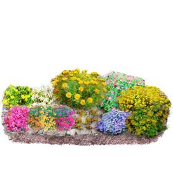BCM Beetpflanze Bunter Steingarten Set, 12 Pflanzen