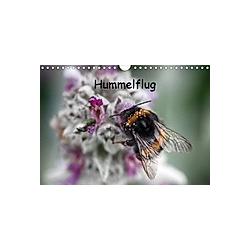 Hummelflug (Wandkalender 2021 DIN A4 quer)