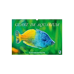 Glanz im Aquarium: Süßwasserfische (Wandkalender 2021 DIN A3 quer)