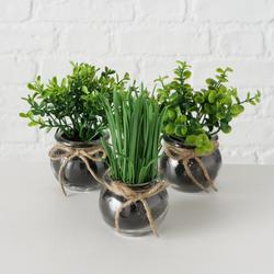 Topfpflanze (BHT 13x15x13 cm)