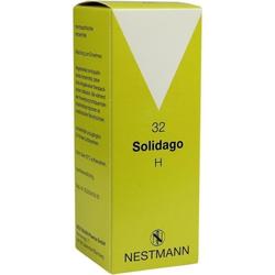 SOLIDAGO H 32