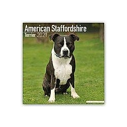 American Staffordshire Terrier - Amstaff 2021