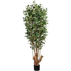 Kunstbaum Ficus Benjamini Ficus Benjamini, Creativ green, Höhe 175 cm