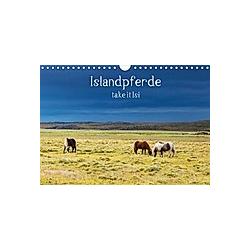 Islandpferde take it Isi (Wandkalender 2021 DIN A4 quer)