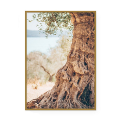 POSTORO Bild Ancient Olive Tree