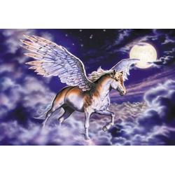 Fototapete Pegasus, glatt 3,50 m x 2,60 m