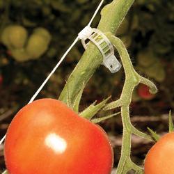 Rion Tomaten-Kit (6 Stk.),,
