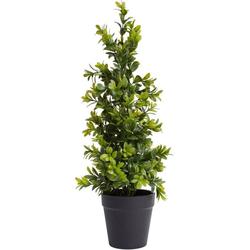 Künstliche Zimmerpflanze Buchsbaum im Topf Buchs, Botanic-Haus, Höhe 42 cm