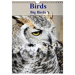 Birds Big Birds (Wall Calendar 2021 DIN A4 Portrait)