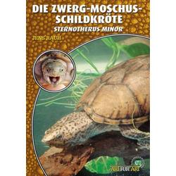 Die Zwerg-Moschus-Schildkröte als Buch von Jens Rauh