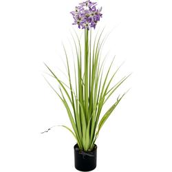 Kunstblume Allium, I.GE.A., Höhe 68 cm, im Topf weiß