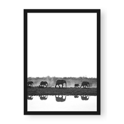 POSTORO Bild Walking Elephants