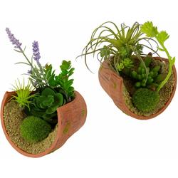 Kunstpflanze Succulente Succulente, I.GE.A., Höhe 17, 12 cm