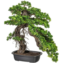 Kunstbonsai Bonsai Podocarpus Bonsai, Creativ green, Höhe 65 cm