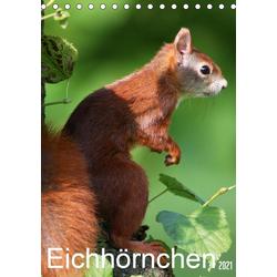 Eichhörnchen / Geburtstagskalender (Tischkalender 2021 DIN A5 hoch)