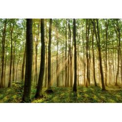 Fototapete Forest, glatt 3,50 m x 2,60 m