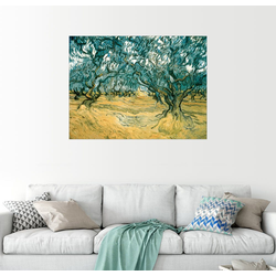 Posterlounge Wandbild, Olivenbäume 40 cm x 30 cm