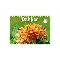 Dahlien - Blütenpracht im Spätsommer (Tischkalender 2021 DIN A5 quer)
